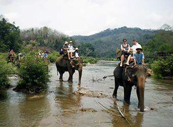 Elephant Programs